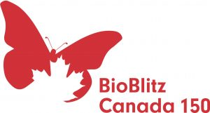 bioblitz photo edited